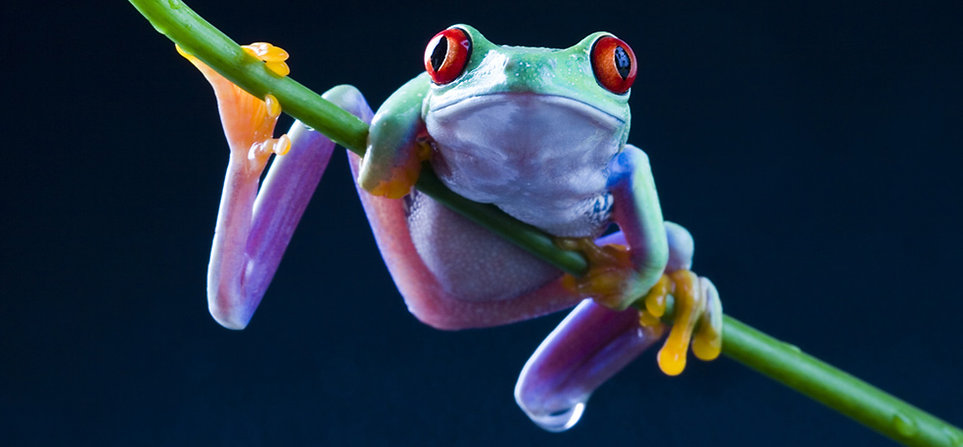 free lesson plan and resources about the life cycle of a frog