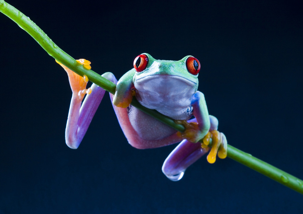 tree frog, mojo, workout, motivation, fitness, fitness blog, nutrition