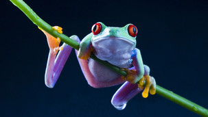 Eat a live Frog every morning!