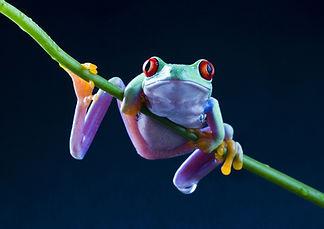 Garden Mania, Frogs, Frogarium