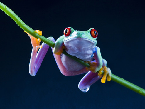 Frogs & Toads: Nature's Barometer
