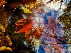 Red Leaf Drown