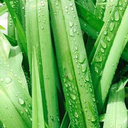 Green Grass, High Tides
