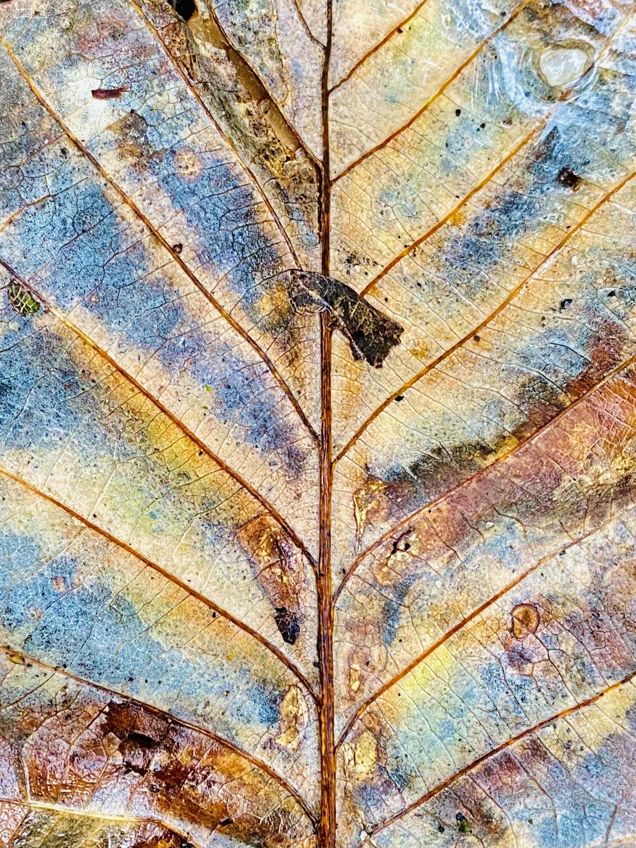 Treepeat