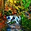 Thumbnail: May Special Purchase: Puck's Glen 3