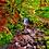 Thumbnail: Puck's Glen 2