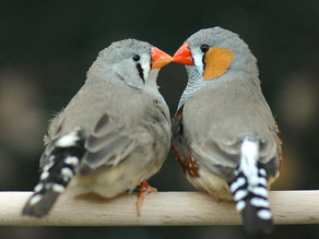 Which bird is the best match for me?