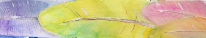 Plume d'oiseau à l'aquarelle