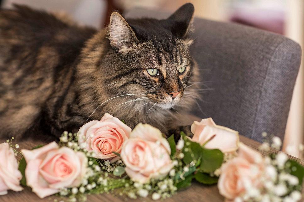 bruidsfotograaf-oudpoelgeest-17.jpg