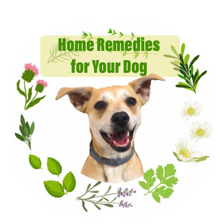 Home Remedies for Your Dog