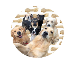Rawhide Chews and Your Dog: Safe or Dangerous?