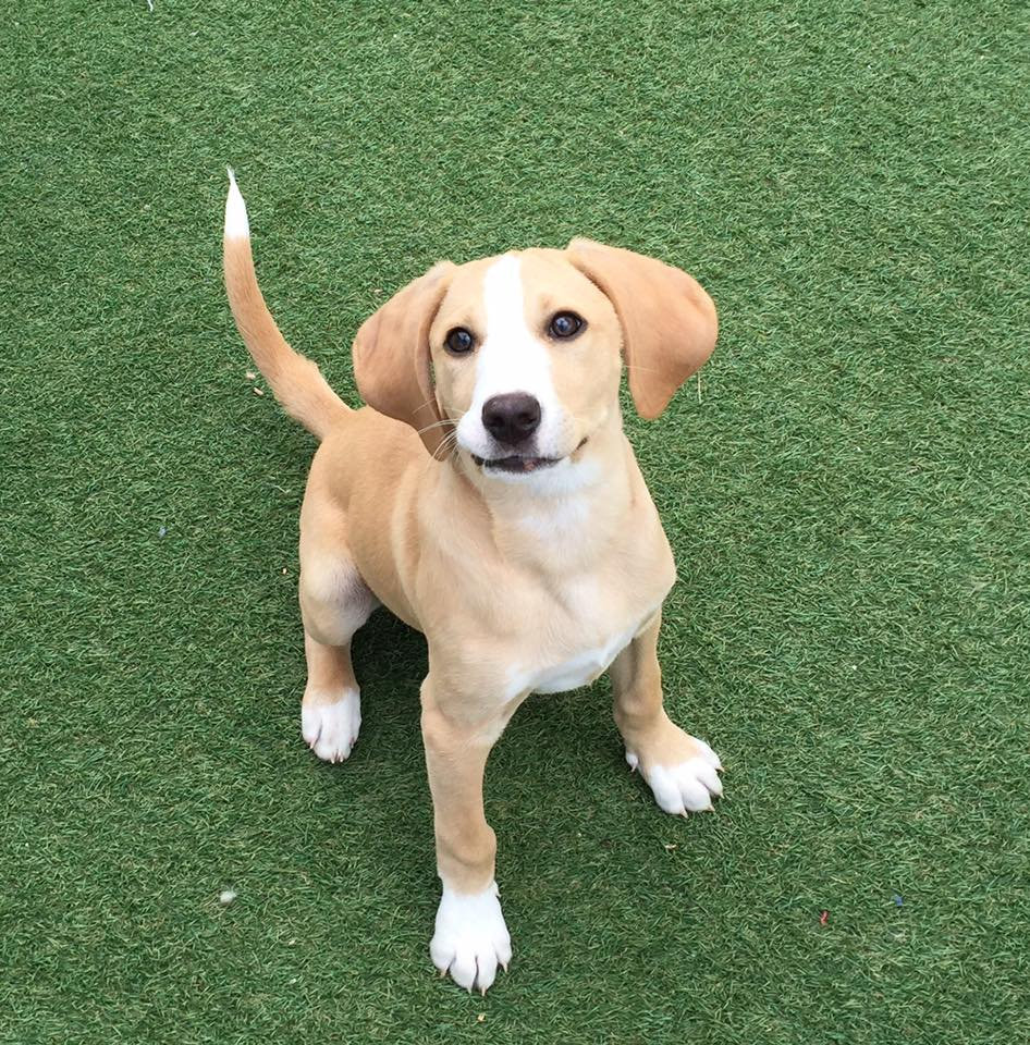 Puppy Group Classes