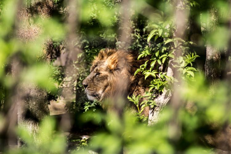 lion 1 insta.jpg