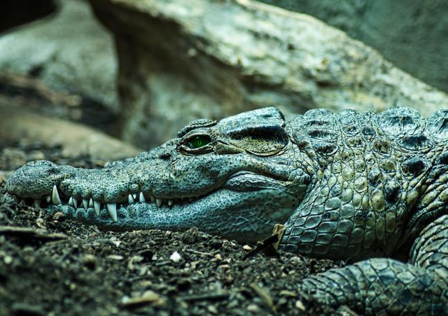 croc insta.jpg