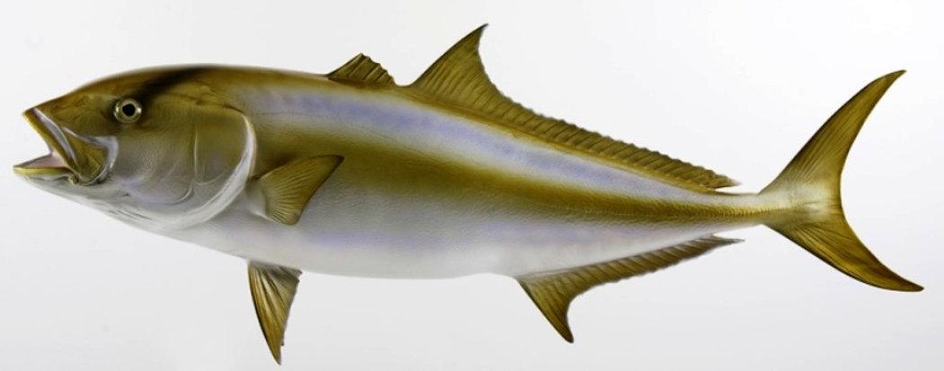 fish12.jpg