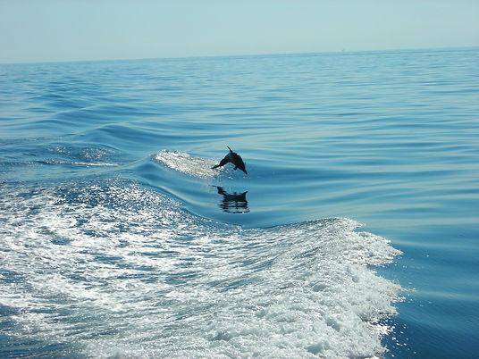 Gulf Shores Bottlenose Dolphins.jpeg
