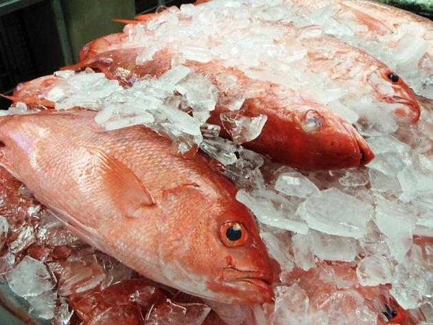 Vermilion_Snapper_Fish.jpeg