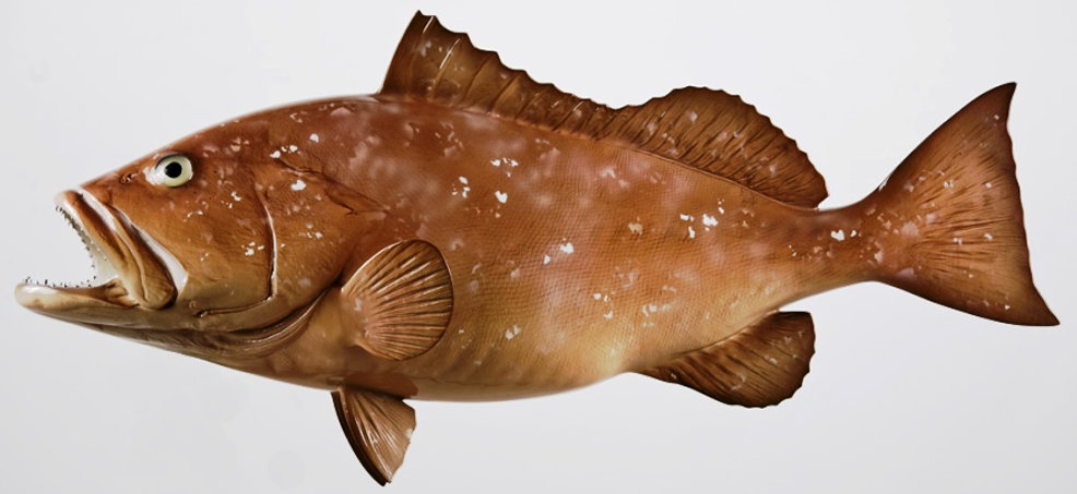 fish9.jpg