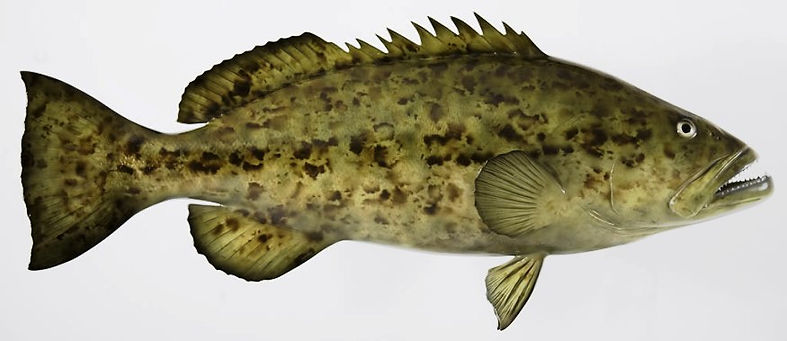 fish10.jpg