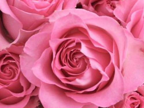 """Sweet Unique"" Roses Six Stems"