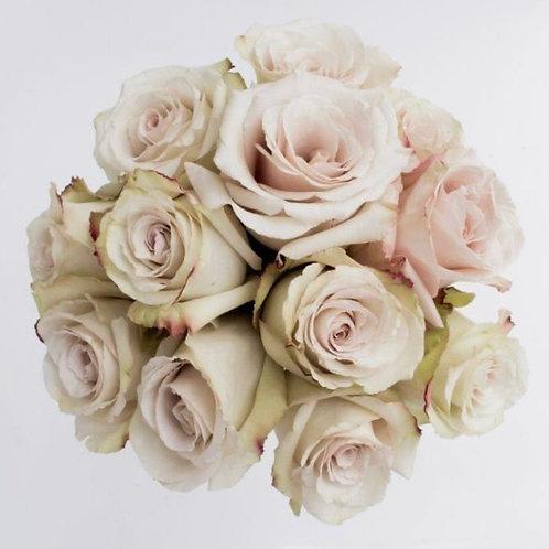 """Quicksand"" One Dozen Ivory Cream Roses"
