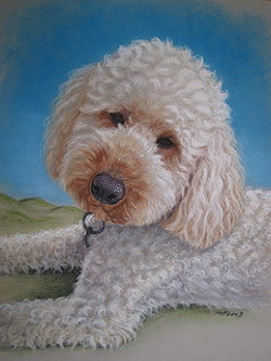 Poodle in Pastel -1