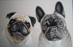 French bulldog & Pug friends in Pastel