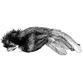 gallo muerto (1).jpg