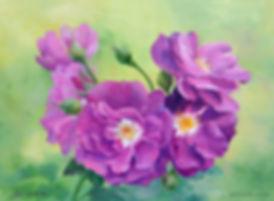 масло, живопись маслом, цветы маслом, шиповник, розы