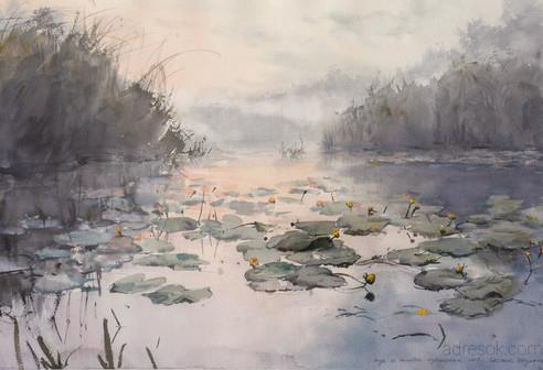 Вода и желтые кувшинки