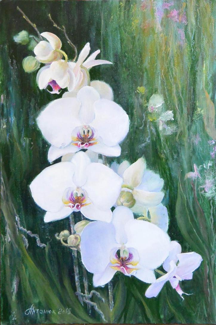 Белые орхидеи. Вариант #2