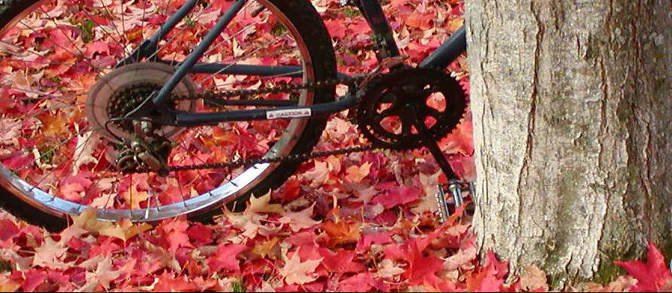 bike in leaves.JPG