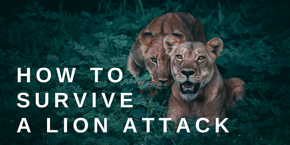 How to Survive a Lion Attack // Aaron Tsang