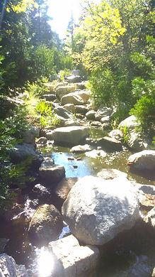 Pine Rose Stream.jpg