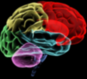 colored brain.png