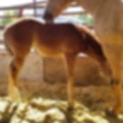 Clus Skipa Hope foal