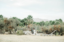 Bride and groom in olive grove
