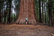 Sequoia Park. Sequoia short.jpg