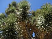 Mojave Desert. Las Vegas and Beyond-33.j