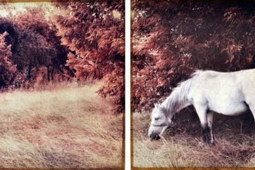 Set of 2 - White Horse