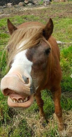 Cheeky Garnet