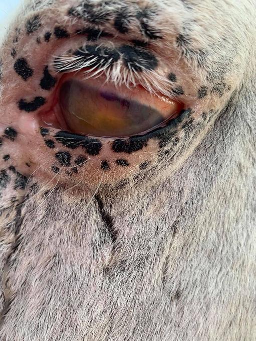 Stella bad eye.jpg