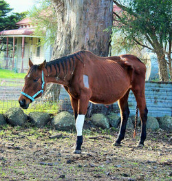 """""""Hope"""" settling in at CP"""