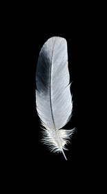 Found Feather I