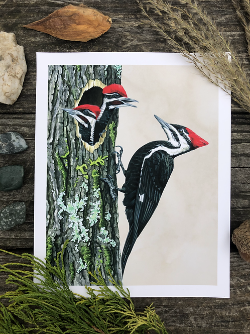 Pileated Woodpecker Family | Art Print