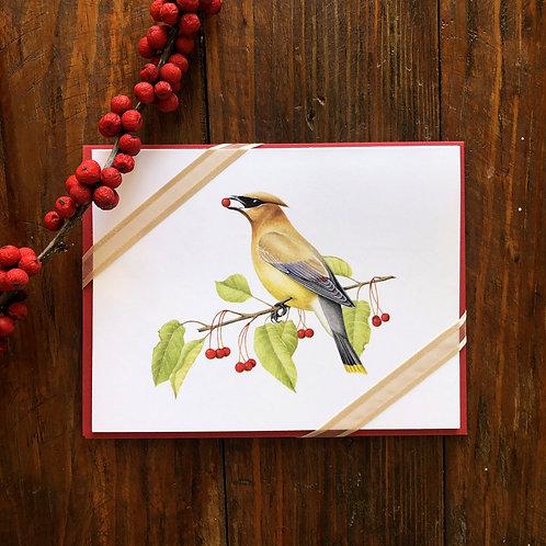 Cedar Waxwing Notecard 3 Pack