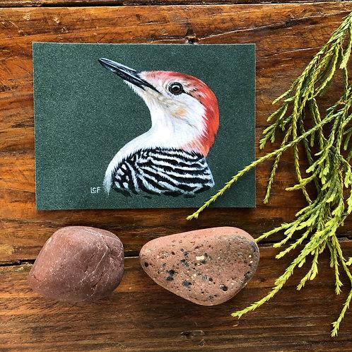 Red-Bellied Woodpecker | Tiny Art Print