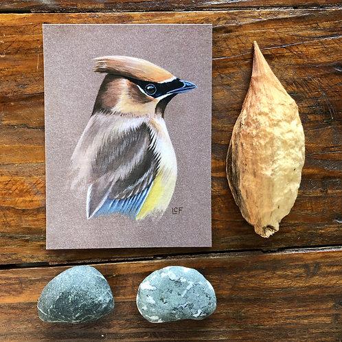 Cedar Waxwing | Tiny Art Print
