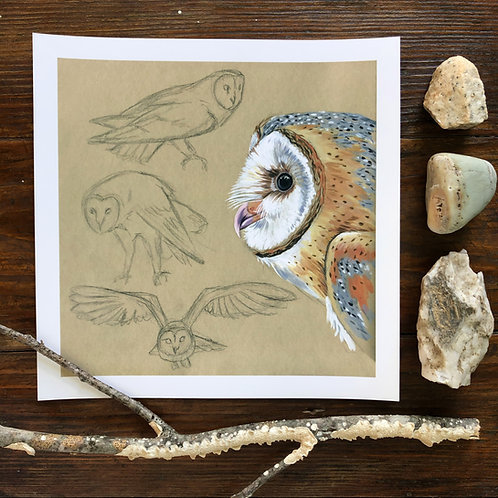 Barn Owl Studies   Art Print