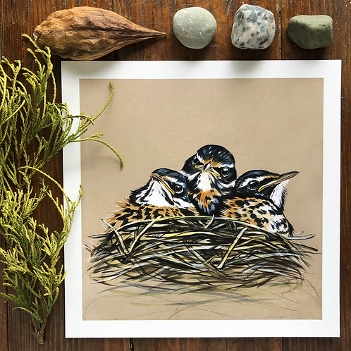 Baby Robins in the Nest | Art Print